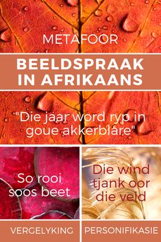 Leer hoe om beeldspraak goed te gebruik in Afrikaans met hierdie puik aanlyn kursus. Klik hier en gaan skryf in. Career Quotes, Success Quotes, Afrikaans Language, Afrikaanse Quotes, Self Improvement Quotes, Wisdom Quotes, Quotes Quotes, Life Quotes, Dream Quotes