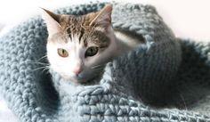 Maison pour chat en crochet