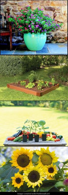 New to Gardening? Here are some great gardening tips.