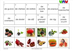 mini loco fruit 12