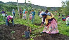 A partir del desarrollo de una fuente de ingresos para la comunidad, queremos contribuir hacia la preservación de la cultura Wixárika, la regeneración de sus recursos naturales y, en consecuencia, la restauración de su medio ambiente.