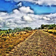 El camino empedrado hacia la casa. Hidalgo.