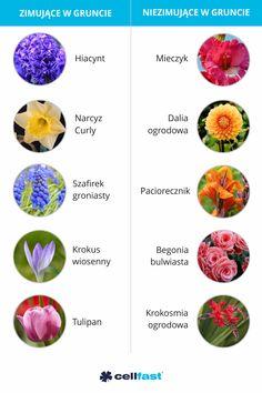 Niektóre byliny mogą rosnąć w jednym miejscu nawet kilkanaście lat.🌺🥀 Na zimę tracą łodygi i liście, aby na wiosnę znów zakwitnąć w naszych ogrodach. Są też byliny, które nie znoszą mrozów 🌬️❄️ dlatego trzeba je wykopywać przed pierwszymi przymrozkami. Wuhan, Balcony Garden, Garden Planning, Diy And Crafts, Flora, Nature, Plants, Gardens, Planters