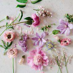 pink and violet fleurs