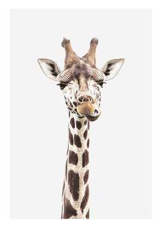 Poster med giraff...