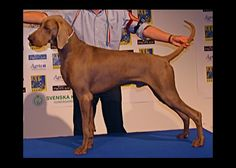 Multi Ch Escobar Jr Class winner