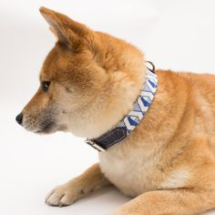 Luxury dog collar from Hiro+Wolf featuring a modern, navy geometric print trimmed with navy leather. Puppy collars available along with matching designer dog leads