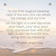 Journey into the east and a new dawn for Sue and her angel dog Phoebe Dog Grief, Animal Communication, Book Letters, Pet Loss, Rainbow Bridge, Animal Quotes, Beautiful Dogs, Blessing, Dawn