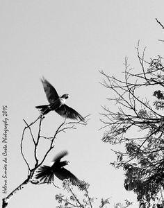 Parrots in Lisboa, Photo credits by Helena Simões da Costa © 2015 http://helenasimoesdacosta.wix.com/helencostafotografia #sky #birds #parrots
