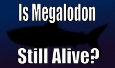Do Megalodon sightings prove the prehistoric shark is still alive today?