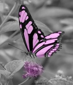 Different Types of Butterflies Most Beautiful Butterfly, Butterfly Photos, Butterfly Wallpaper, Butterfly Kisses, Pink Butterfly, Monarch Butterfly, Butterfly Wings, Butterfly Painting, Picture Of A Butterfly, Butterfly Symbolism