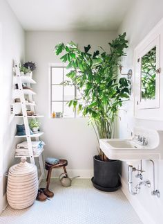 Des plantes vertes sur le sol de la salle de bain