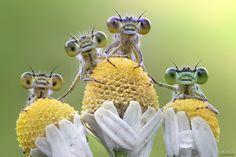Four cute baby animals - Quatro simpatiche damigelle escono dai cespugli per prendere le prime luci del sole.
