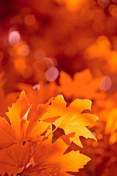 Sweet autumn! #autumn #fall #nature #outside #wallpapers #ios #iphone