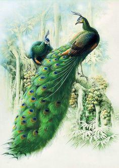 Схема вышивки «Зелёные павлины» - Вышивка крестом