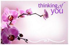 Thinking Of You Flowers Image-twq143desi41