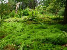 Natural moss garden