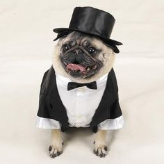 Chester as he walks down the aisle :) Wouldn't he make a great ring-bearer in this outfit?!