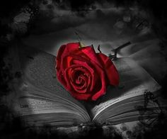 G+ rose