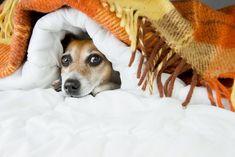 Ori de câte ori un animal se simte amenințat, fie că este vorba de un pericol real sau imaginar, în organismul lui apar modificări pentru a se pregăti pentru fugă sau atac. Aceste modificări apar d…
