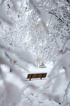 Der Winter ist kalt in der Hauptstadt und abgesehen von schönen Spaziergängen durch einen der viel Winter Photography, Nature Photography, Photography Couples, Photography Portraits, Photography Ideas, Free Winter Wallpaper, Winter Wallpapers, Parks, Winter Magic