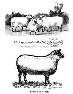sheep image transfer