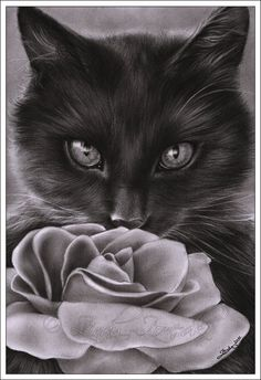 Pretty Cat and Rose