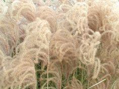 Jak skomponować rabatę z wysokich traw?