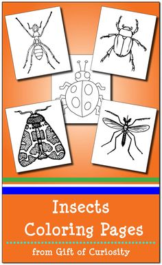 FREE Insects Coloring Pages - just print and go! Learn about insects while relaxing and coloring in these beautiful printable images. Butterfly Frame, Butterfly Crafts, Butterfly Dragon, Monarch Butterfly, Insect Coloring Pages, Easy Coloring Pages, Insects For Kids, Bugs And Insects, Science Activities For Kids