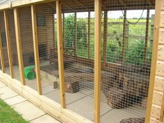 walk in rabbit run outdoor enclosure - Google Search