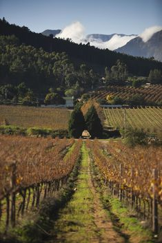 Wine Sale, Farm Shop, New Menu, Winter Beauty, Beautiful Gifts, Wines, Vineyard, Landscapes, Paisajes