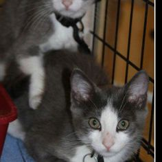 This is Holly & Howie and they are up for adoption at pets inc.