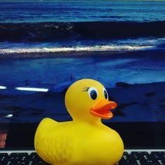 El Pato de Triego, en un mar de mentira.