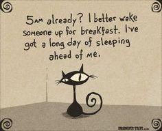 Cat cartoon waking up early in the morning.  SO true!