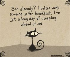 Cat cartoon waking up early in the morning.  SO true!