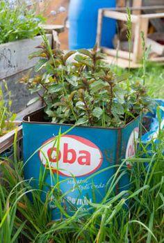 Urban Gardening Kraeuter in Blechdose