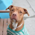 CANDLE – A1073743. IN FOSTER CARE. NOT SAFE. NYC ACC  8/09/16