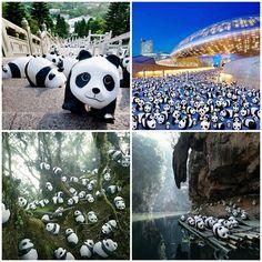 1600 Pandas+ será atração durante o verão coreano