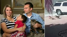 Hero cat's family tells story behind boy's rescue: 'Dog did not even know what hit him'