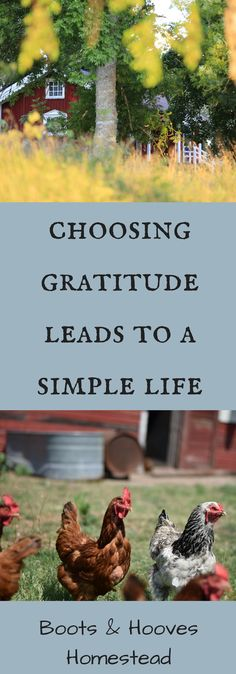 Choosing Gratitude Leads to a Simple Life - Boots & Hooves Homestead