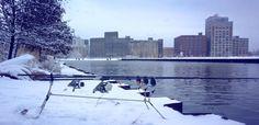 Zima to dla wielu z nas długa przerwa podczas której przygotowywujemy się do nowego sezonu. Nad wodami pozostają tylko nieliczni, którzy znoszą minusowe temperatury.  Zachęcamy do przeczytania relacji z zimowej zasiadki naszego użytkownika. http://karpiarstwo.pl/zimowe-karpiowanie-w-usa/