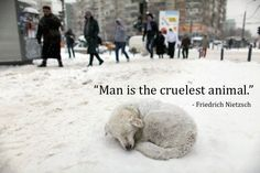 """Chances are this is happening somewhere right now... #HelpTheHelpless   """"Do to others as you would have them do to you."""" Luke 6:31 (NIV)   #Faith #Hope #Love #Kindness #Jesus #God #Animals #Juno #Blizzard #WinterStorm2015 #Snow #Light #Help #Lift #Christian #Rescue #News #Purpose #Shelter #Storm #Aspca"""