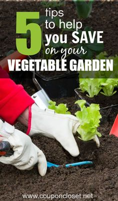 Here are some easy tips to help you with frugal gardening. With these 5 tips you will see that your vegetable garden doesn't have to cost you a fortune.