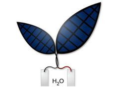 Artificial Leaf Converts Solar Energy To Fuel That May One Day Power Your Car : SCIENCE : Tech Times