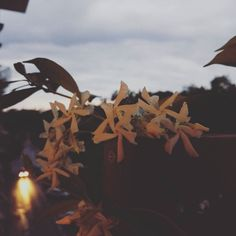 #Treviso #flowers