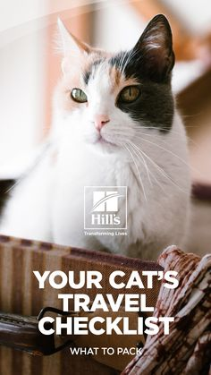 120 Cat Care Ideas In 2021 Cat Care Cats Pets