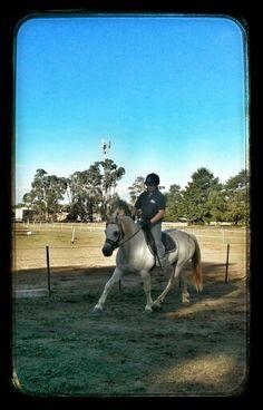 Connemara stallion, Gneevebrack Storm Connemara Pony, Ponies, Animals, Animales, Animaux, Animal, Pony, Animais