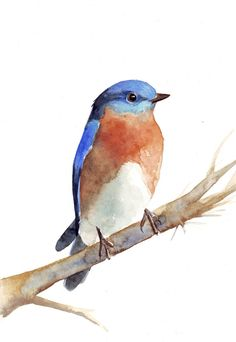 Bluebird Painting   print of watercolor painting by Splodgepodge, $20.00
