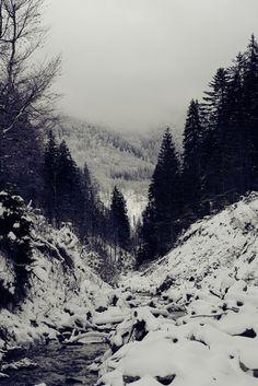 vintage/nature