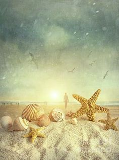seashells at the beach | Starfish and seashells at the beach